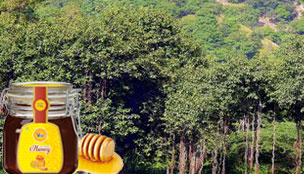 Organic Forest Honey