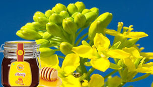 Mustard/Rapeseed Honey